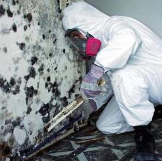 treating green mold removal how to remove mold from basement. Black Bedroom Furniture Sets. Home Design Ideas
