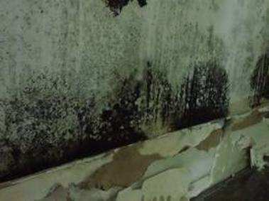 how to remove mold from basement home